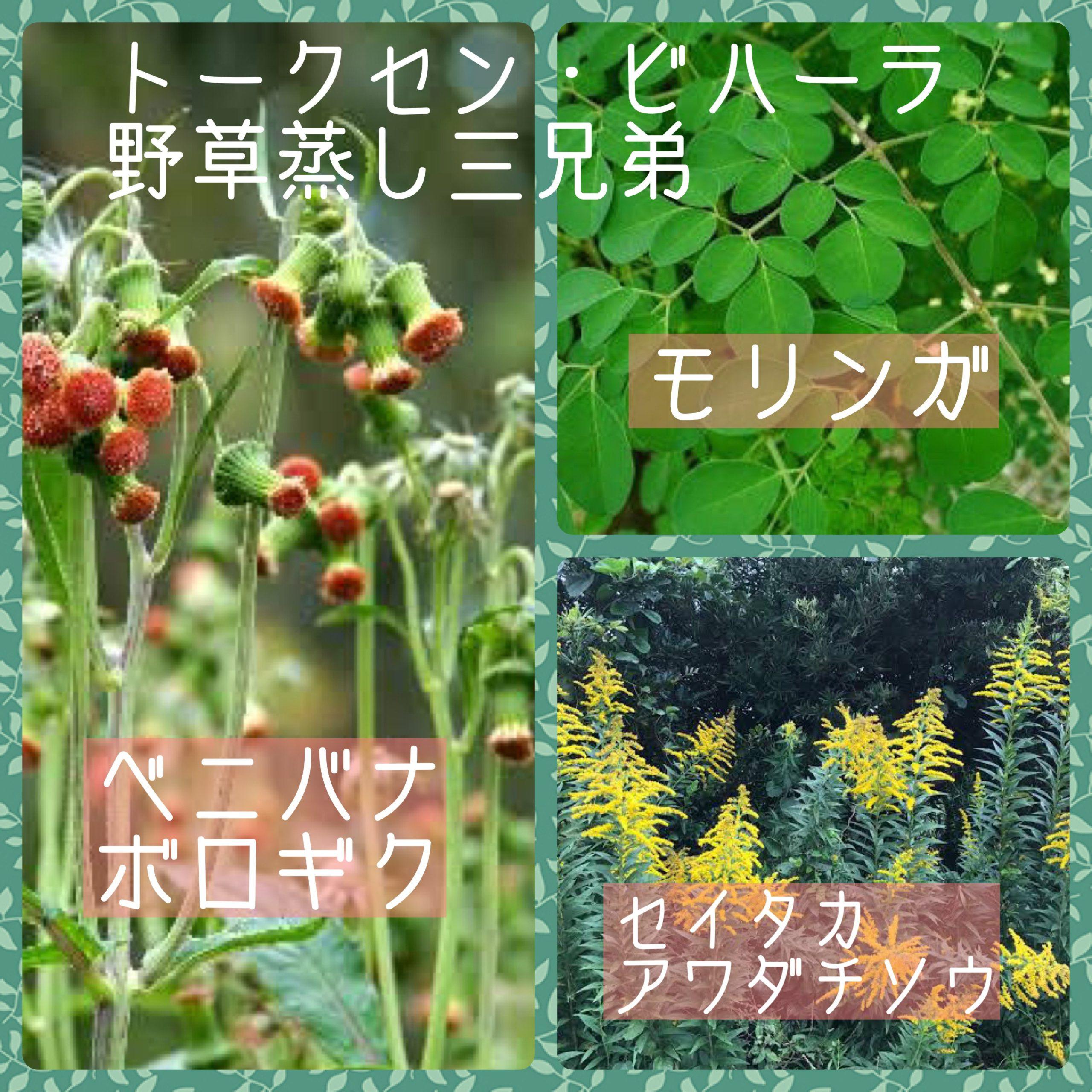 トークセン・ビハーラ/野草蒸し